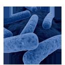 难辨梭菌 (C. difficile) 感染管理